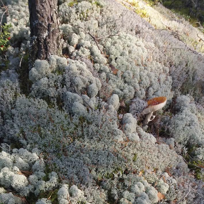 nettisivujen kuvat mellilä metsä markku haanpää