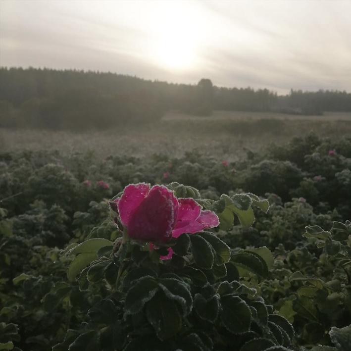 nettisivujen kuvat metsämaa Noora Rantanen