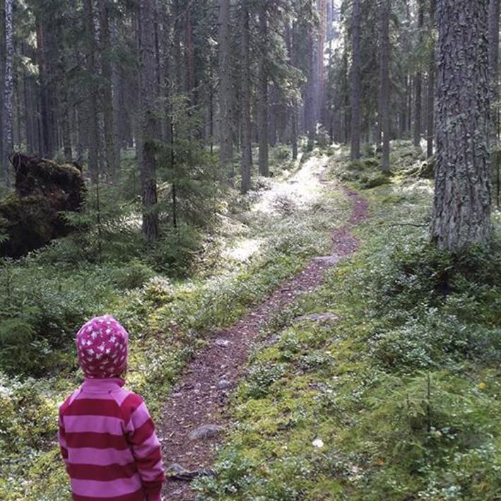 nettisivujen kuvat metsämaa sanna ylösmäki