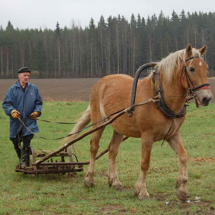 Hevostöitä kylvöpäivät 2009
